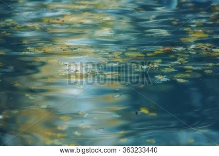 Soft Blue Background Radiant Water Surface With Autumn Leaves And Reflections. Yellow Leaves On A Tu