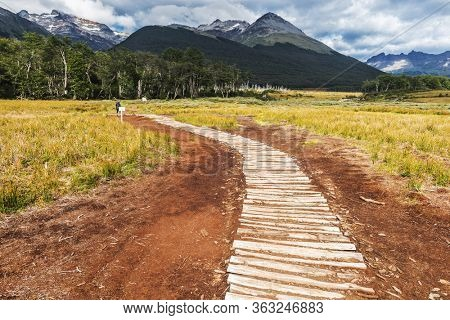 Wooden path in the middle of Antarctic beech forest leading to Laguna Esmeralda glacial lagoon under the Andes mountains in Tierra del Fuego in Argentina