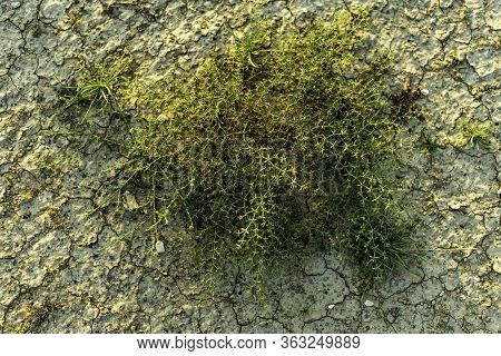 An Outdoor Landscape Closeup Of A Wild Green Shrub Plant Growing At Desolate Arid Desert Sand Shot O