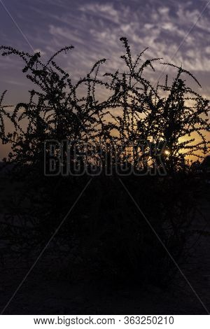 A Closeup Tranquil Landscape Scene Of The Black Silhouette Shadow Of A Tree In A Field Set On Orange