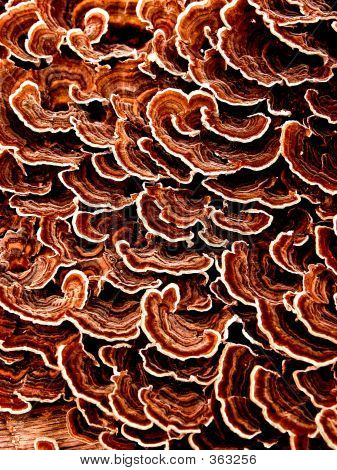 cluster of wood fungus on downed tree. poster