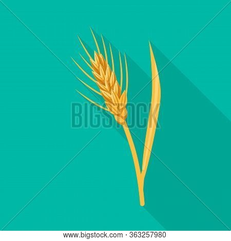 Vector Design Of Barley And Sheaf Symbol. Collection Of Barley And Crop Stock Symbol For Web.