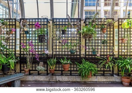 Assorted Houseplants With Orchids And Air Ferns In A Greenhouse Structure.