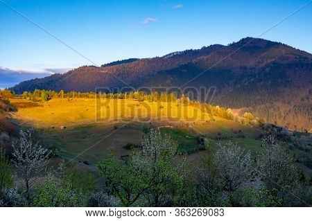 Beautiful Landscape With Sunset Light And Blooming Trees