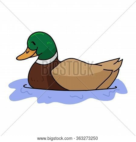 Cute Cartoon Mallard Duck On Pond Vector Clipart. Wildlife Animal Waterfowl For Nature Lovers. Styli