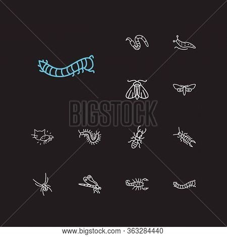 Insect Icons Set. Termite And Insect Icons With Black Widow Spider, Moth And Caterpillar. Set Of Ext