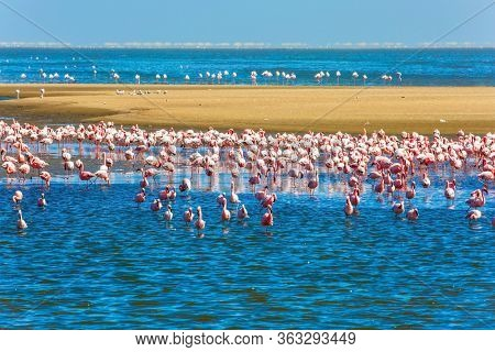 African coast of the Atlantic. Colony of pink flamingos. Interesting birdwatching. Gorgeous  Namibian resort of Swakopmund. Ecological, active, zoological and photo tourism concept