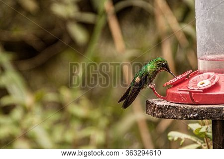 Bird Drinking In A Trough In A Forest