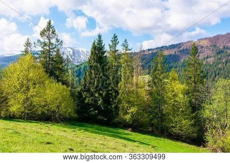 Wonderful Landscape In Springtime. Row Of Trees On The Meadow. Mountain Ridge Beneath A Blue Sky Wit