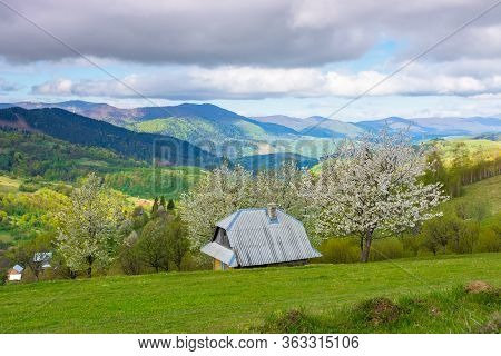 Beautiful Rural Scenery In Mountains. Blossoming Trees On The Grassy Hills. Village In The Distant V