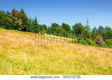 Grassy Meadows Of Mountainous Scenery In Summer. Idyllic Mountain Landscape On A Sunny Day. Beech An