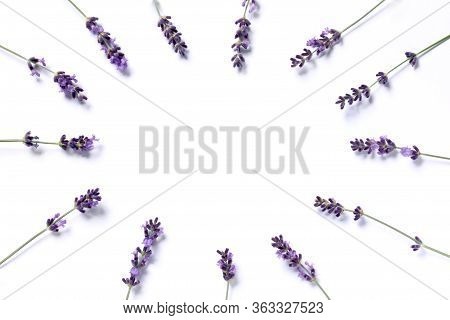 The Sprigs Of Flowering Lavender Are Arranged In A Circle On A Bright Background. Blank For A Gentle