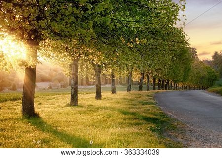 Beautiful Line Of Trees Alone A Rural Road At Sunset. Natural Landscape Quiet English Road Scene In
