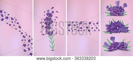 3d Realistic Flowers Lavender With Green Leaf. Fragrant Lavender On Violet Background. Beautiful Lav