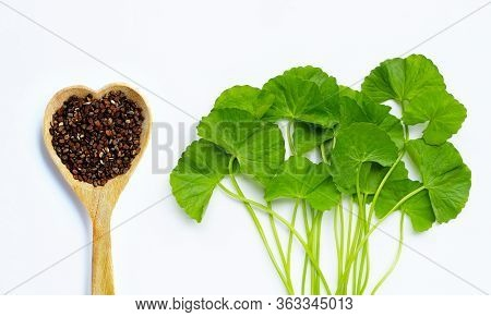 Fresh Green Gotu Kola With Seeds On White Background. Top View