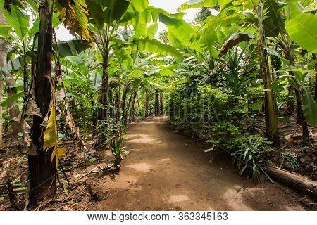 Village's Main Street Beetween Banana Plantation In Marangu, Tanzaniam, Africa