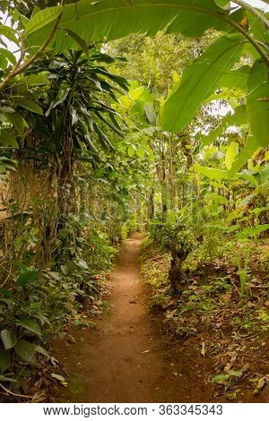 Marangu's Village Main Street Between Banana Plantation
