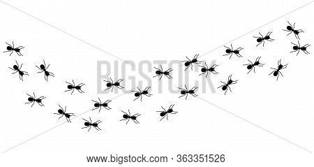 Ant Column. Black Insect Silhouettes Trip. Teamwork, Hard Work Metaphor. Forest Life, Isolated Ants