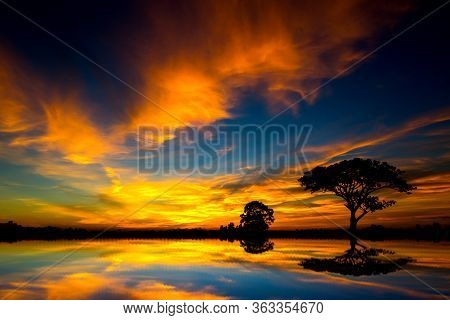 Panorama Silhouette Tree In Africa With Sunset.tree Silhouetted Against A Setting Sun Reflection On