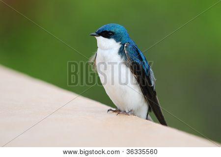 Bird in Alaska