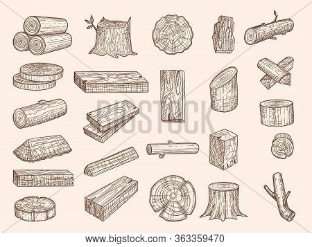 Wooden Trunks. Vintage Drawn Lumber Stacked Oak Wooden Old Plants Chopping Vector Sketch Set. Oak Tr