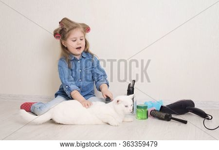 Little Girl In Hair Curlers Playing Pet Salon Or Hairdresser  With Her White Cat. Kid Combing Her Pe