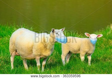 Sheeps With Surgical Face Mask. Concept Of Herd Immunity, Conformism And Mass Behavior With Social D