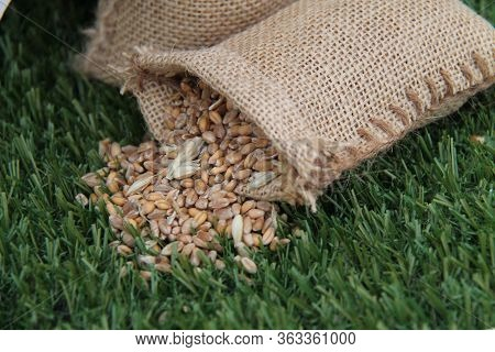 A Miniature Hessian Sack Holding Cereal Grains.