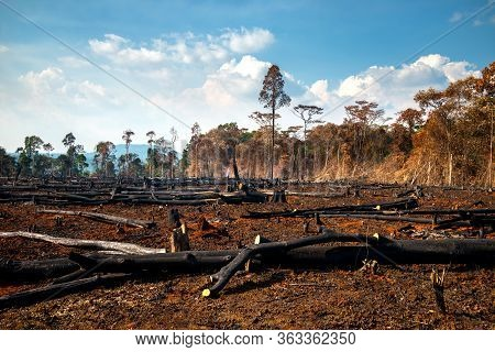 Wood Cutting, Burning Wood, Destroying The Environment.area Of Illegal Deforestation Of Vegetation N