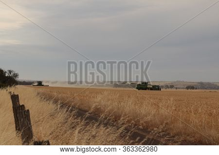 Large Combine Machinery Harvesting A Wheat Crop On A Farm In An Agricultural, Dry, Windy And Dusty F