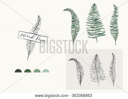 Sword Fern Leaf Logo And Branch. Hand Drawn Wedding Herb, Plant And Monogram With Elegant Leaves For