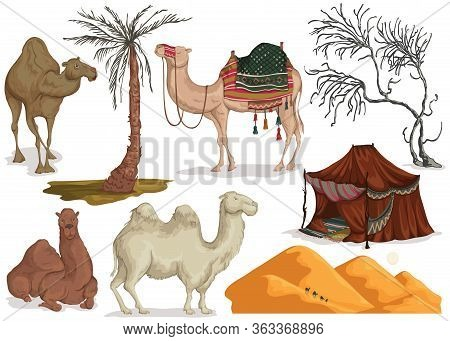 Camels In Different Poses, Sand Dune Of Desert, Nomad Tent, Dried And Palm Tree. Collection Scenery