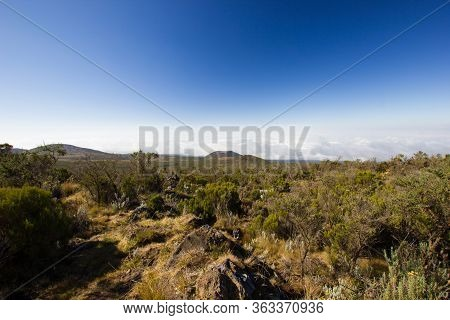 Steppe On The Marangu Route To The Mount Kilimanjaro In Africa