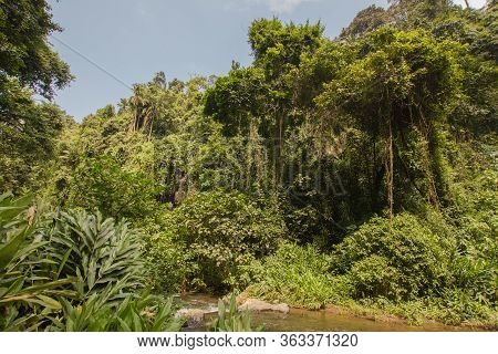 Jungle In Tanzania, Africa, On A Sunny Day