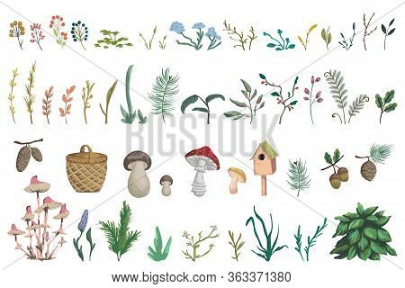 Forest Plants, Berries, Flowers, Mushrooms, Plant, Berry, Cones. Decorative Design  Elements Of Fore