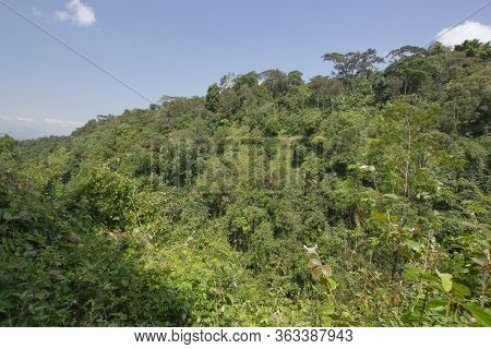View Over A Jungle In Tanzania, Africa, On A Sunny Day