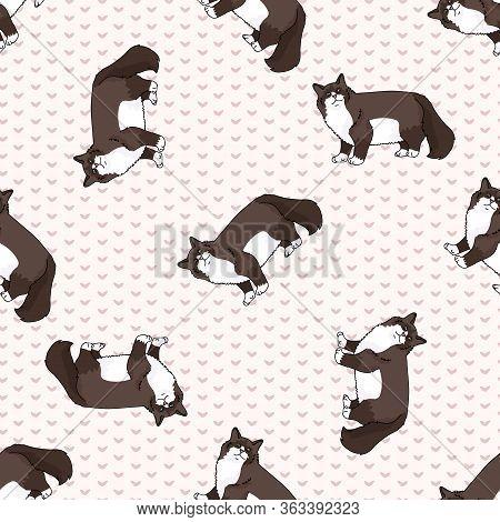 Cute Cartoon Snowshoe Cat Seamless Vector Pattern. Pedigree Kitty Breed Domestic Kitty Background. C