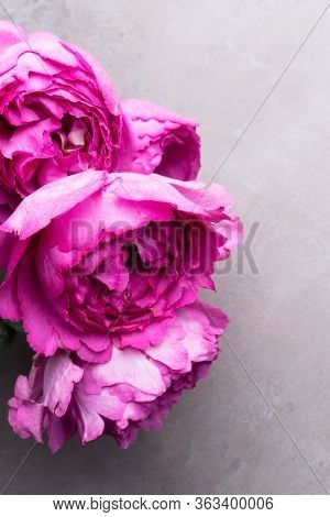 Pion-shaped Roses Isolated On Grey Background