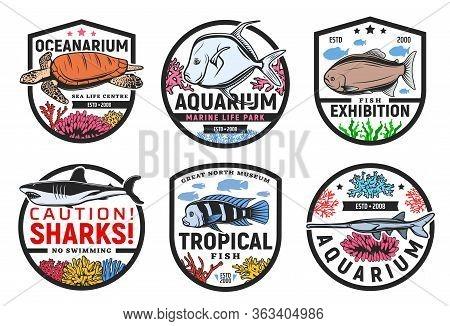 Oceanarium, Undersea World Aquarium And Tropical Fish Exhibition, Vector Icons. Wild Underwater Sea