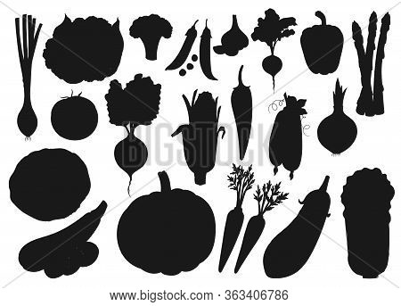 Vegetables And Farm Veggies, Vector Silhouette Icons. Organic Vegetarian Food Cabbage, Pumpkin, Toma