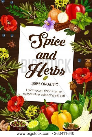 And Herbs, Vector Poster, Natural Cooking Seasonings And Herbal Flavorings. Herbal Condiments And Cu
