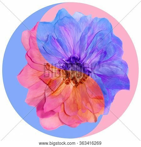 Floral Symbol Yin-yang. Briar. Geometric Pattern Of Yin-yang Symbol, From Plants On Colored Backgrou