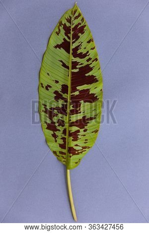 Tropical Palm Leaf On Blue Background. Flat Lay, Top View