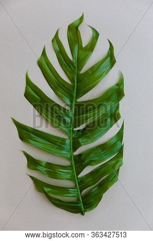 Tropical Palm Leaf On Gray Background. Flat Lay, Top View