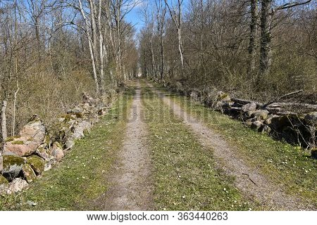 Dirt Road Surrounded Of Dry Stone Walls Through A Forest In Spring Season