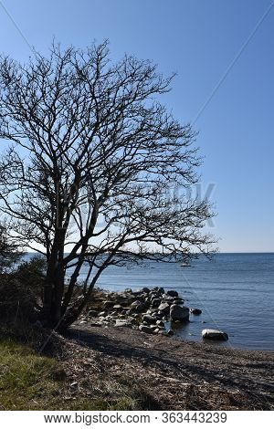 Spring Season By A Beautiful Coastline With A Bare Tree