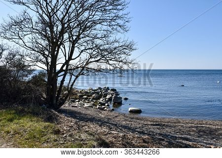 Bare Tree By A Coast With Blue Water In Spring Season