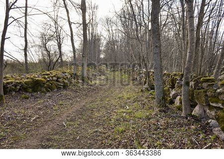 Footpath Surrounded With Mossy Dry Stone Walls In The Swedish Nature Reserve Karum On The Island Ola