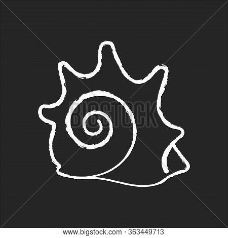 Rock Shell Chalk White Icon On Black Background. Exotic Seashell, Conchology Astraea Phoebia. Empty