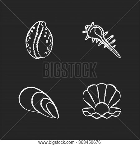 Different Sea Shells Chalk White Icons Set On Black Background. Seashells Collection, Conchology Ope